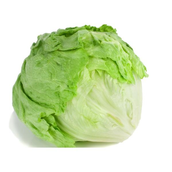 Iceberg Lettuce EA